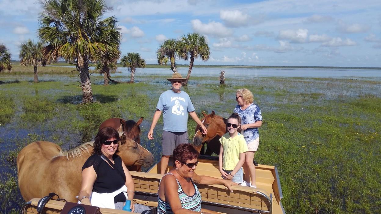 Airboat passengers petting the marsh horses